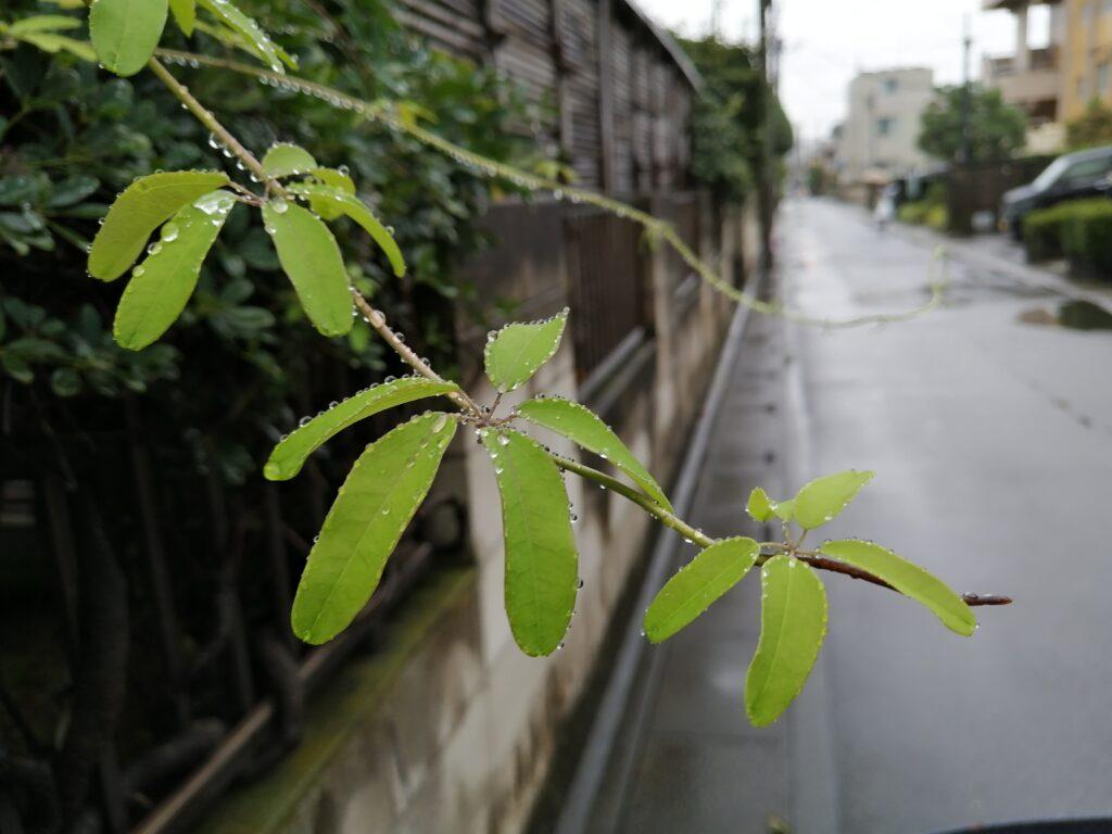 雨のお盆と
